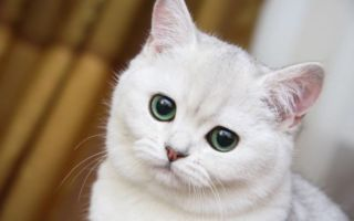 Плюсы и минусы стерилизации кошек: когда лучше проводить и каким методом