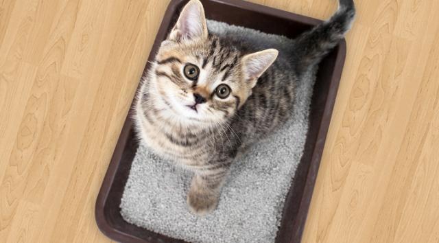 Силикагелевый наполнитель туалета для кошек плюсы и минусы