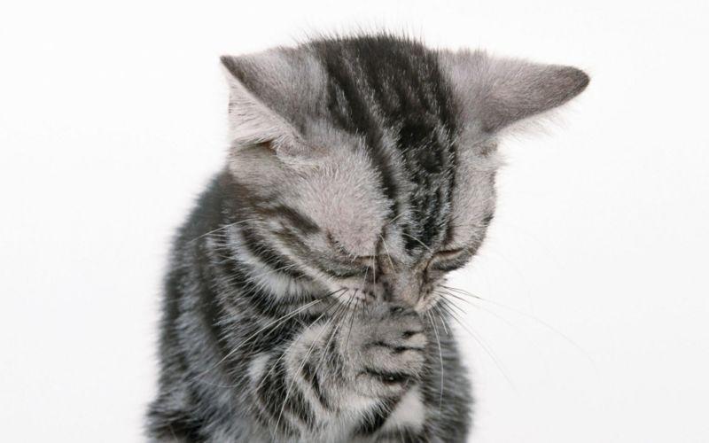 Антибиотик при рините у кошек thumbnail
