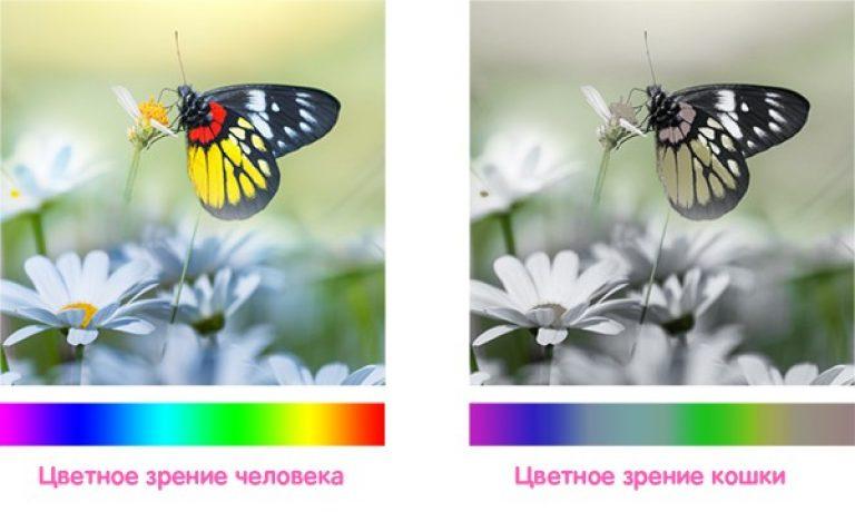 Разное цветовосприятие людей и кошек