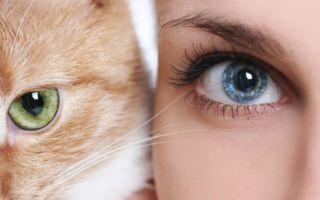 Глаза кошки и человека