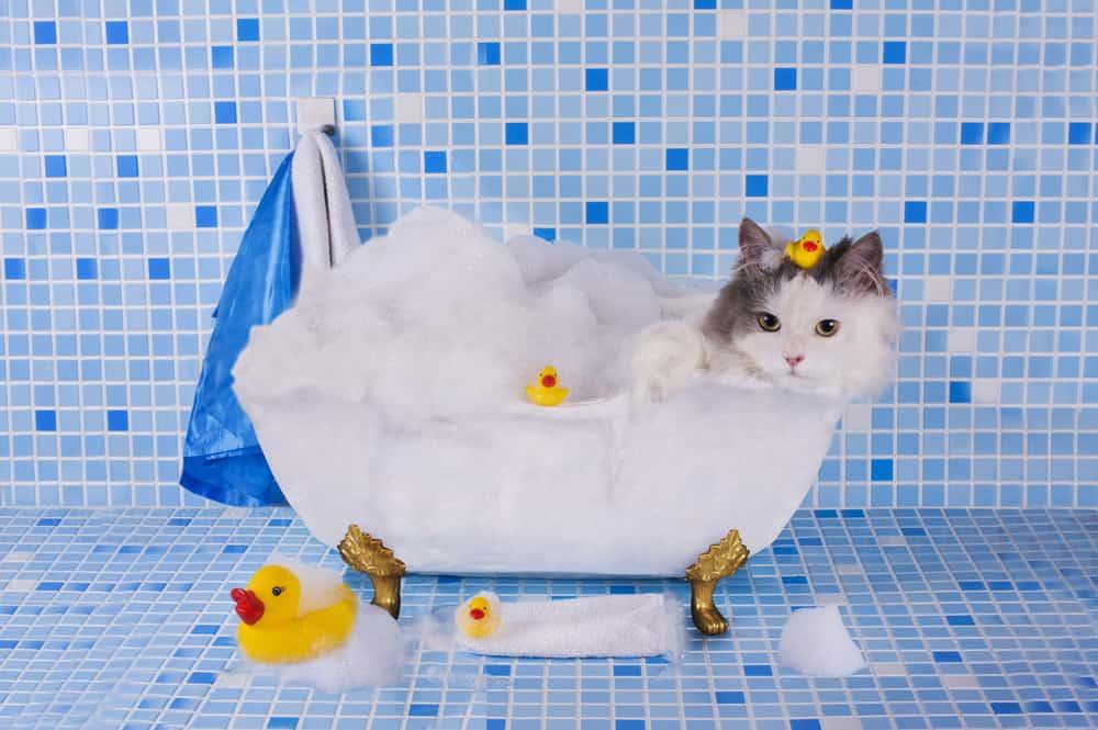 Длинношерстный котенок в ванне