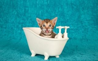 С какого возраста и как правильно купать котенка