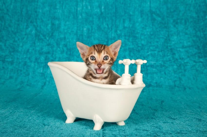 Маленький котенок в ванночке
