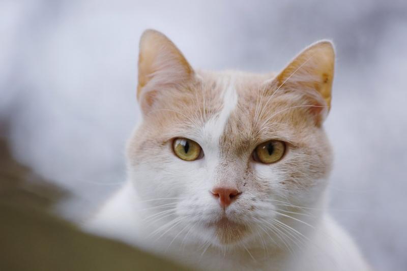 Кошка смотрит на человека