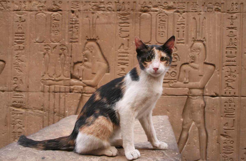 Кошка - священное животное Египта