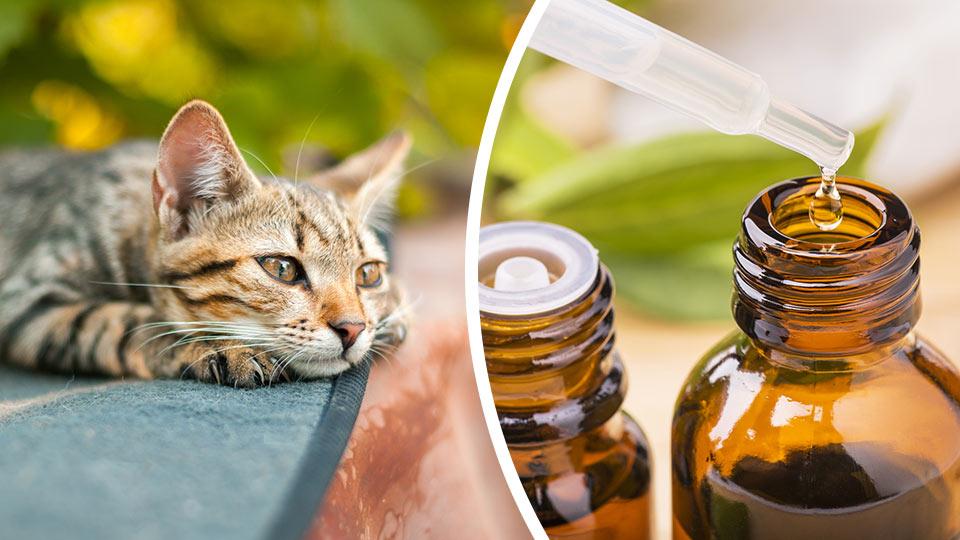 Эфирные масла отпугивающие кошек