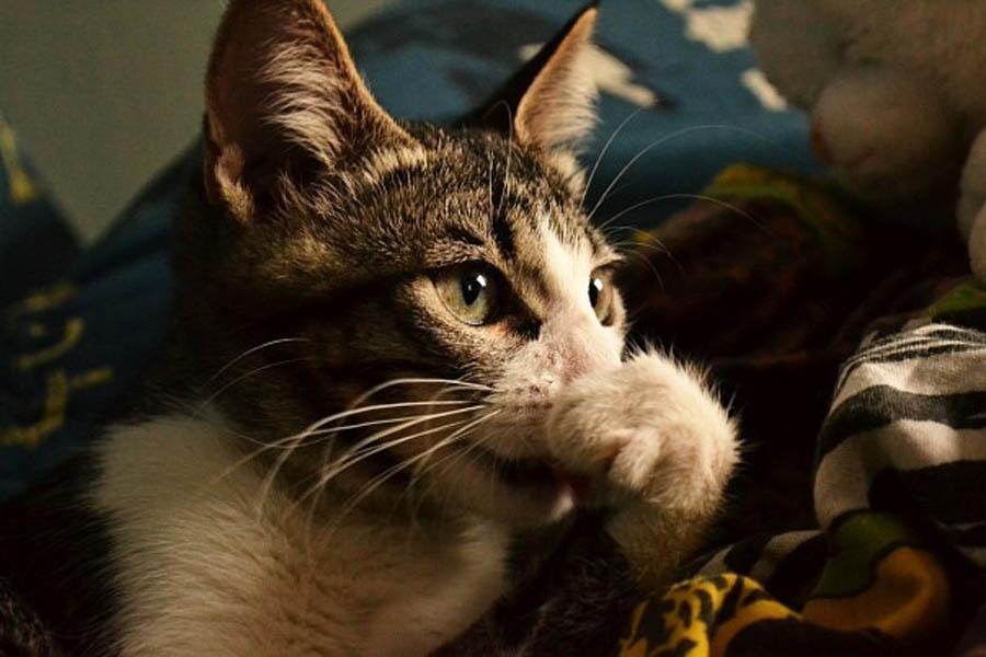 Кот и отпугивающие запахи