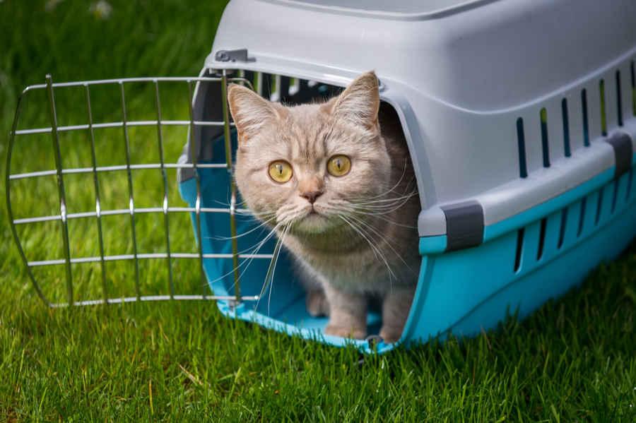 Кошка в переноске на траве