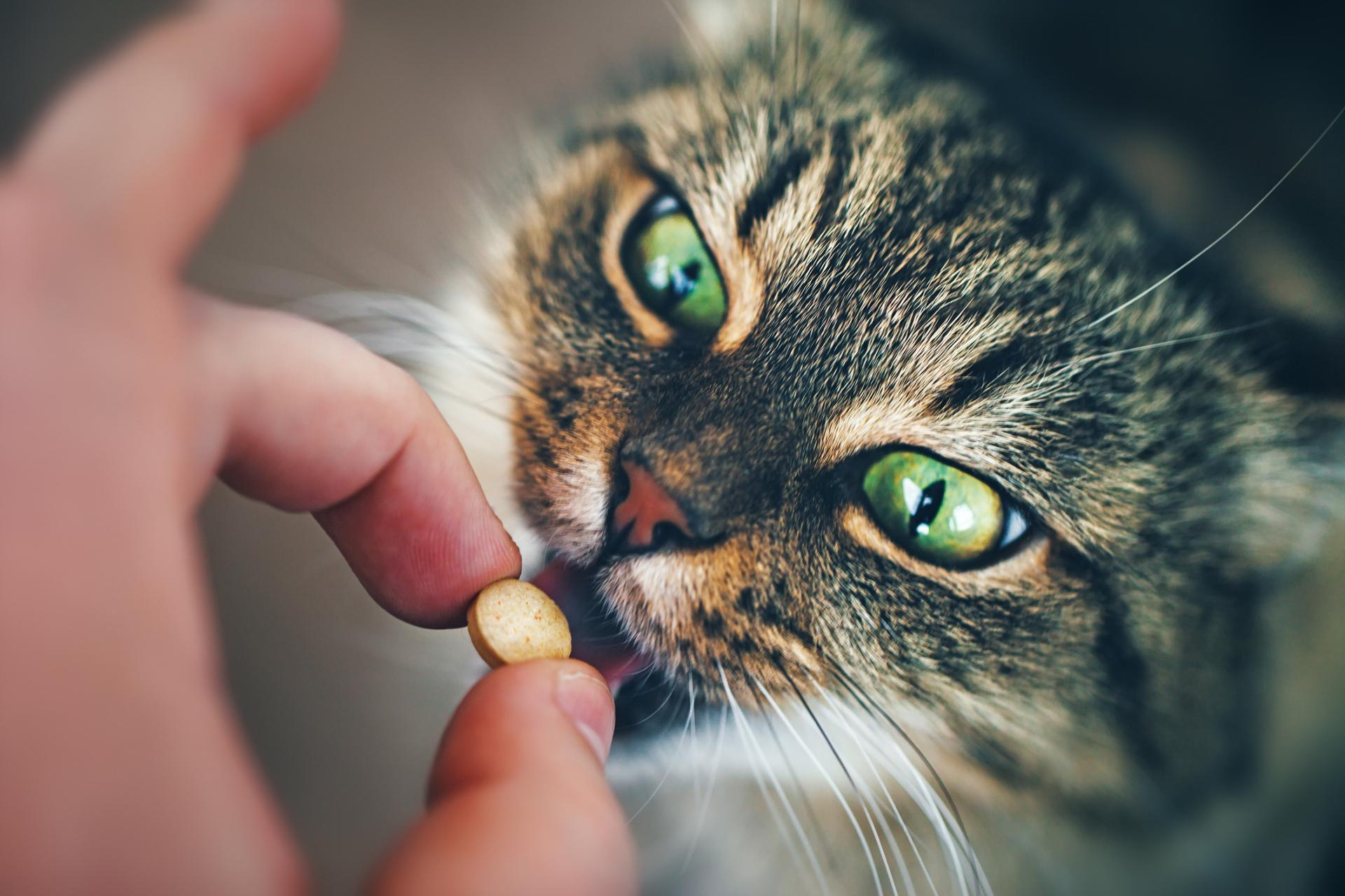 Таурин для кошек в витаминах