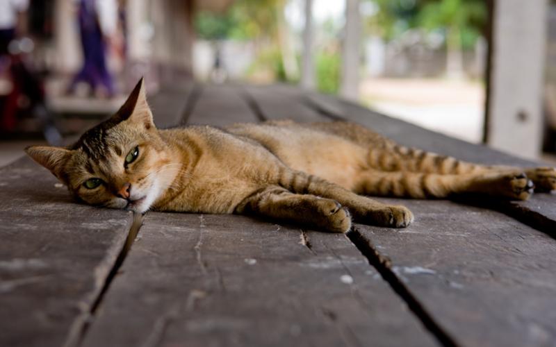 Вялость и сонливость при нехватке таурина
